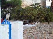 folegandros201113