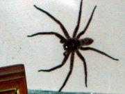 australia200924