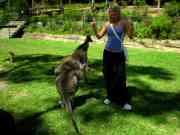australia200938