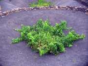 fuerteventura200603